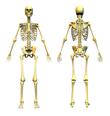 ist2_454953-human-skeleton-front-and-back.jpg